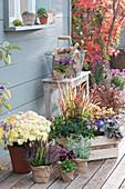 Herbst Arrangement mit Chrysantheme, Knospenheide, Rotgras und Purpurglöckchen