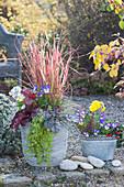 Herbstzauber mit Rotgras, Purpurglöckchen, Pfennigkraut und Hornveilchen