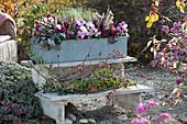Herbstkasten mit Stiefmütterchen, Knospenheide, Purpurglöckchen auf Blumentreppe