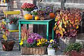 Kiesterrasse mit Strauchhortensie in Herbstfärbung im Korb