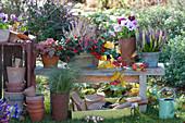 Herbst - Arrangement mit Knospenheide, Scheinbeere, Stiefmütterchen