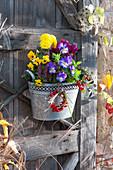 Zink-Gefäß mit Hornveilchen, Chrysantheme, Scheinbeere und Knospenheide