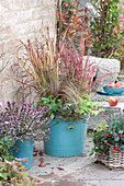 Herbst Arrangement mit japanischem Rotgras und Strauchveronika Magicolors