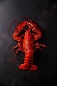 Boiled red Lobster on black background