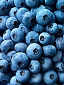 Blueberries (edge to edge)