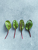 Set of four fresh green chard leaves on gray stone background