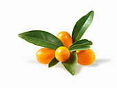 Kumquats with leaves