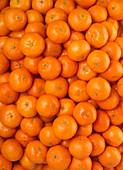 Tangerines (edge to edge)