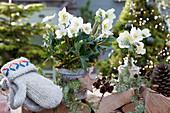 Christrose im Rindentopf und Blüten in Flasche