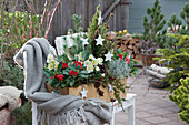 Winterfest bepflanzter Holzkasten mit Skimmien und Christrosen
