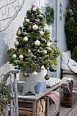 Weihnachtsterrasse mit Zuckerhutfichte und Feuerschale