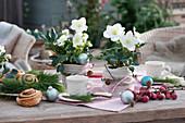 Christrosen 'Wintergold' mit Strickband verkleidet als Tischdekoration