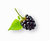 A blackberry with a leaf