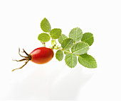A rose hip in a sprig