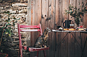Cat on wooden chair next to table set with fig tarts and coffee in garden