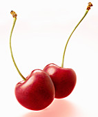 Two bright red cherries
