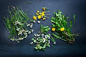 Various healing bitter plants