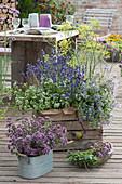 Kräuter - Terrasse mit Oregano, Majoran, Lavendel, Würzfenchel und Borretsch