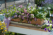 Holzkasten mit Fächerblume in drei verschiedenen Farben