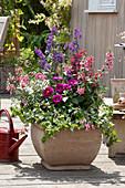 Rosarot und violette Farbkombination mit Engelsgesicht, Dahlie und Taubnessel