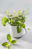 A bunch of herbs in an enamel mug