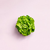 A young lettuce