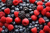 Mixed Berries, Close Up