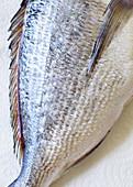 A fresh fish (detail)