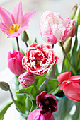 Various tulips in vase