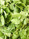 Fresh spinach leaves (full frame)