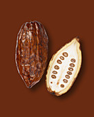 Halved cocoa pod on a brown background