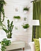 Zimmerpflanzen Arrangement