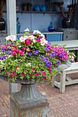 Sommerblumen Mischung in Schale