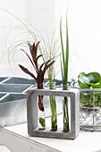 Pflanzen in Glasröhren