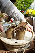 Bewässerung von Saatgut