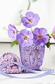 Blüten von Storchschnabel in der Vase