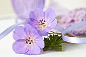 Blüten von Storchschnabel