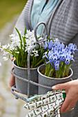 Frühlingsblumen im Topf