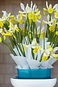 Iris hollandica 'Montecito'