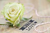 Rosenblüte zum Valentinstag