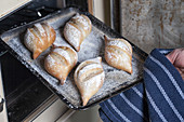 Lifestyle shot of Fresh bread rolls being taken out of an oven