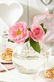 Rosafarbene Rosenblüten in Glasvase
