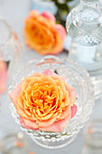 Rose in der Vase