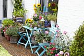 Sommerterrasse mit Sonnenblumen, Lavendel und Malven