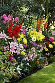 Buntes Beet mit Gladiolen, Dahlien und Lilien