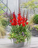 Rote Gladiolen und Zauberglöckchen in Zink-Gefäß