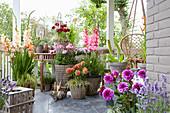 Terrasse mit Gladiolen und Dahlien in Töpfen