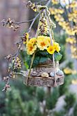 Frühlingsprimel auf Holzscheibe an Zweig gehängt