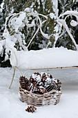 Verschneite Bank und Korb mit Zapfen im winterlichen Garten