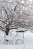 Verschneite Stühle unter Zierapfelbaum im Winter